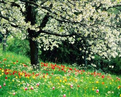 Primavera (30/6/05) 400_1207718570_primavera